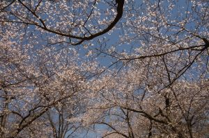 blooms3